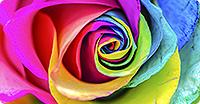 Des couleurs constantes, sur chaque page et sur chaque matériel.